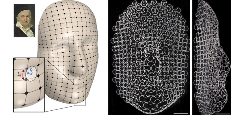 On the left, a portrait of Carl Friedrich Gauss. On the right, the shape shifted lattice of the experiment matching the curves of Gauss's face.