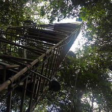 A ladder to the top of the rainforest