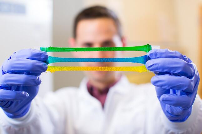 picture of researcher stretching tough gel
