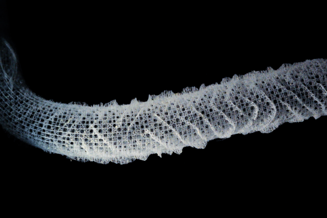 The skeleton of Euplectella aspergillum