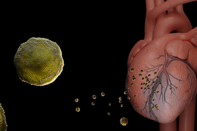 An illustration of exosomes traveling to the heart to repair damage caused by a heart attack.