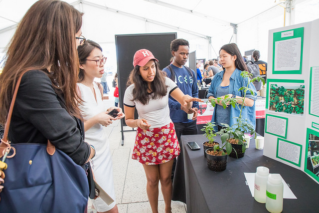 Environmental science and engineering concentrator Leticia Ortega, S.B. '19, discusses her team's hydroponic aquaponic water filtration system. (Photo by Eliza Grinnell/SEAS Communications.)